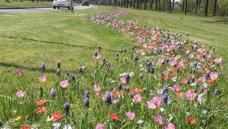 bloemenstrook slingerend door grasveld