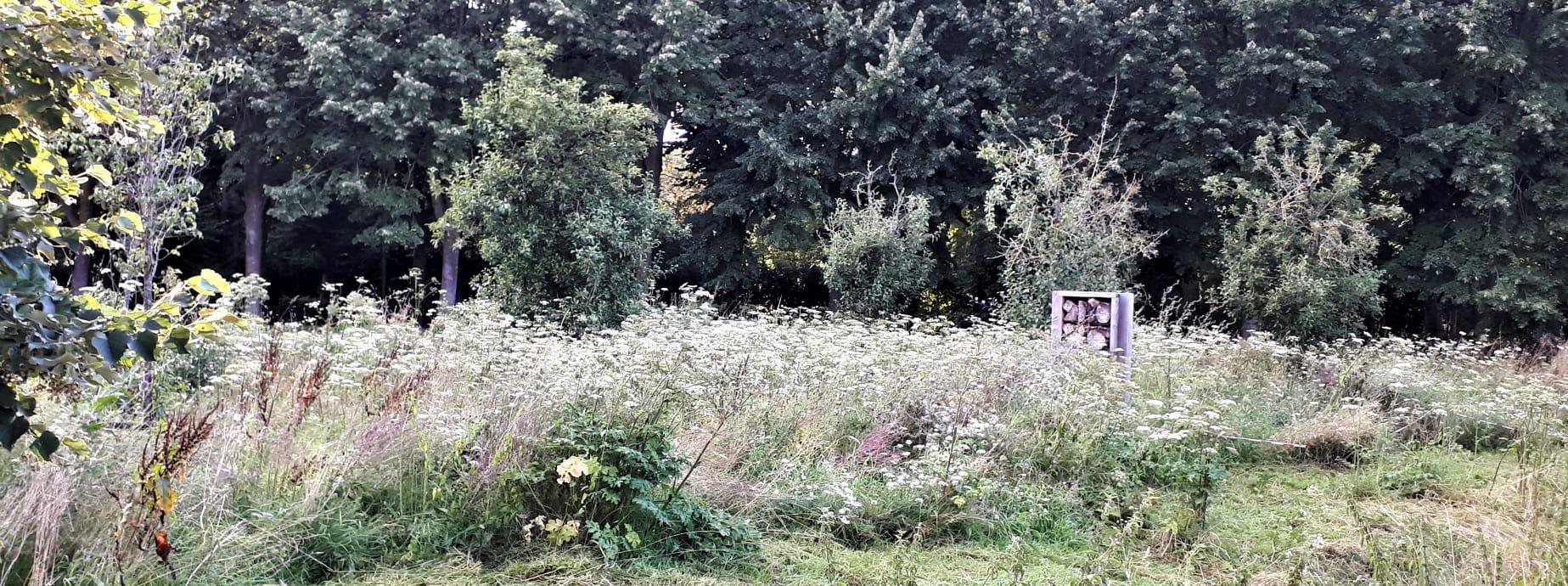 bijenlint in volle bloei (3)